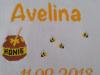 Avelina-08.20