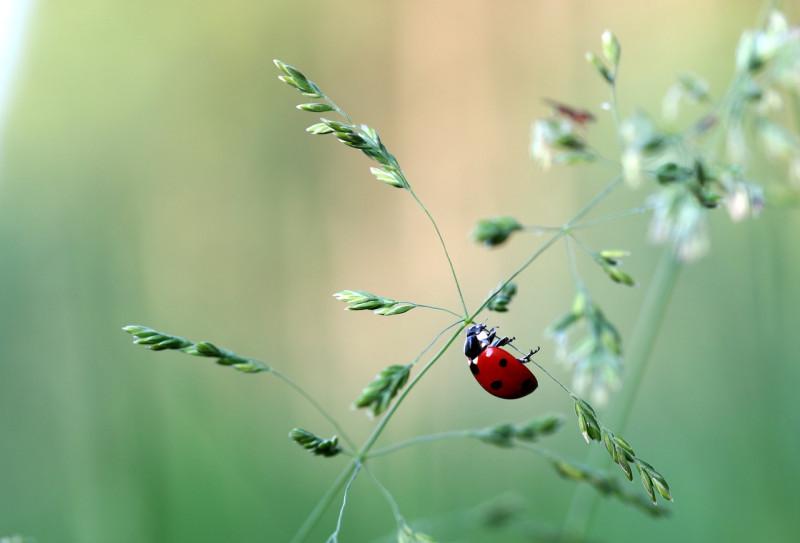 ladybug-1478033_1280