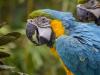 macaw-508877_1280
